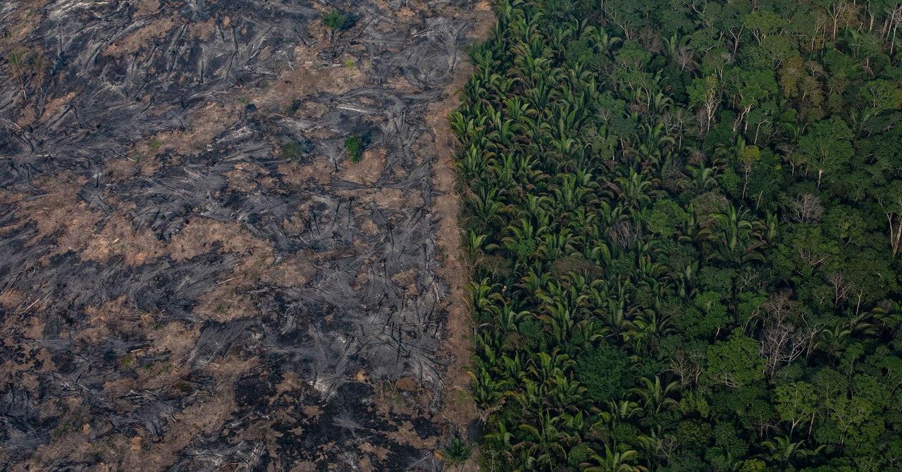 ¿Es mejor plantar árboles o dejar que los bosques vuelvan a crecer naturalmente?