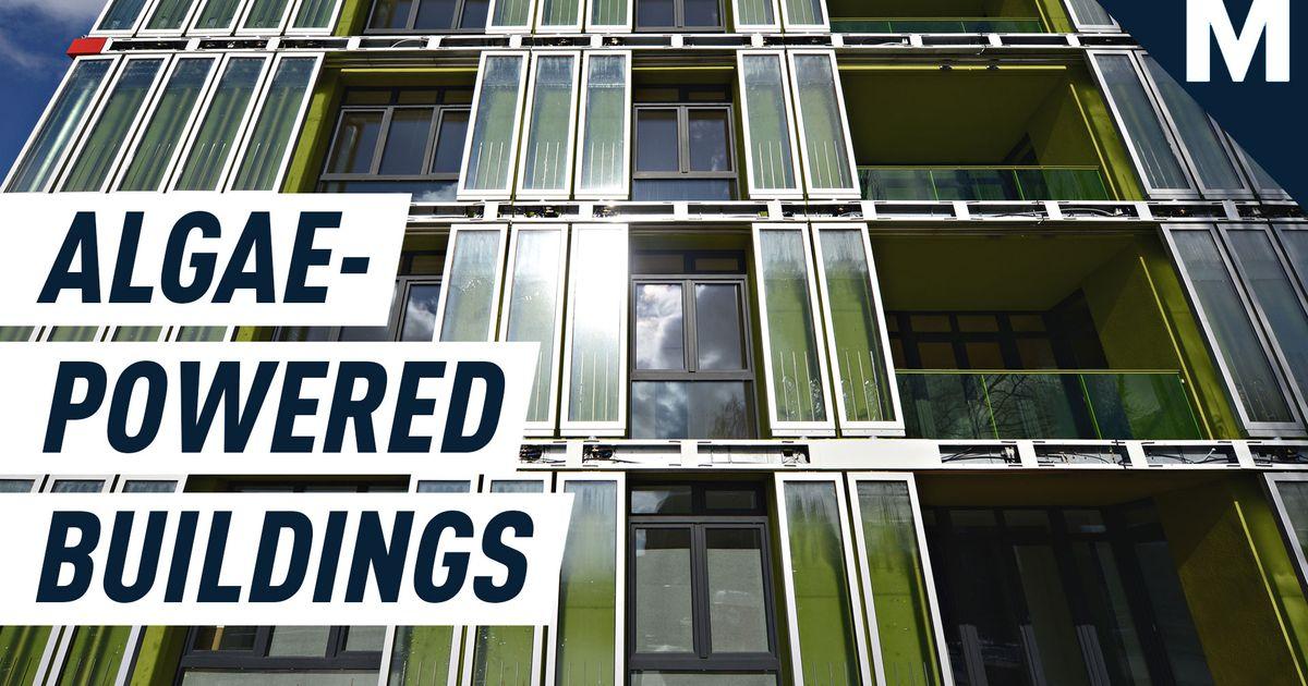 Las fachadas de algas vivas cubren los edificios, absorbiendo CO2 y sol para producir energía renovable