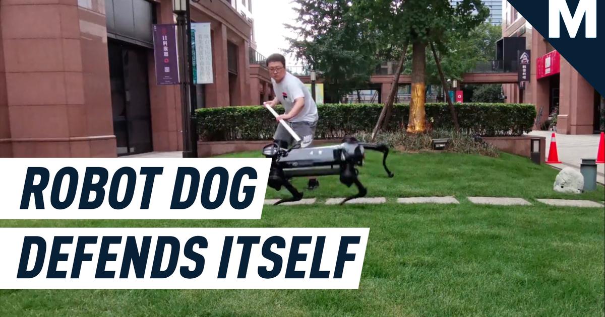 Mira a este perro robot aprender a defenderse de los molestos humanos