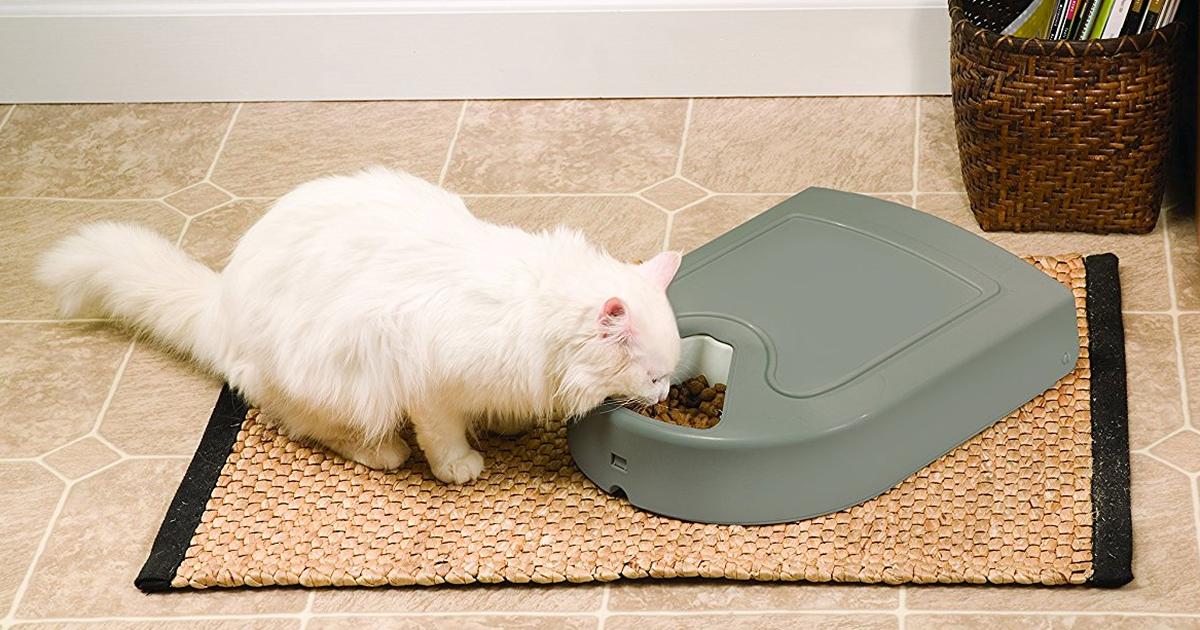 Mantén a tu gatito alimentado y feliz