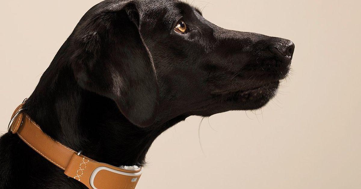 Utilice estos rastreadores para localizar a su mascota