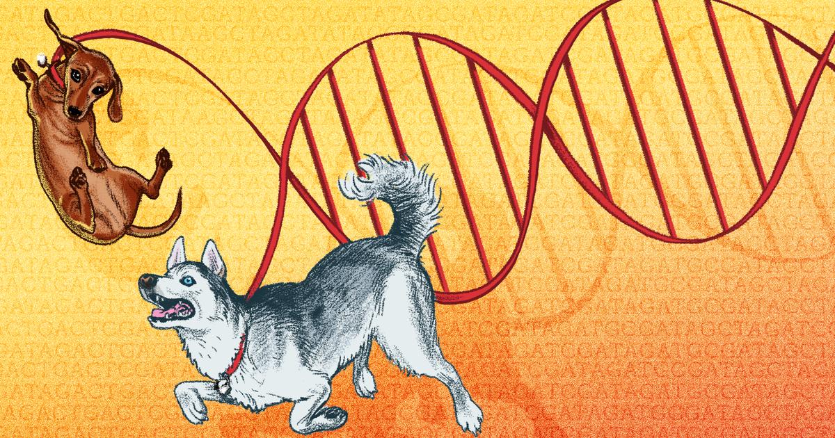 Descubra la raza de su perro y mucho más